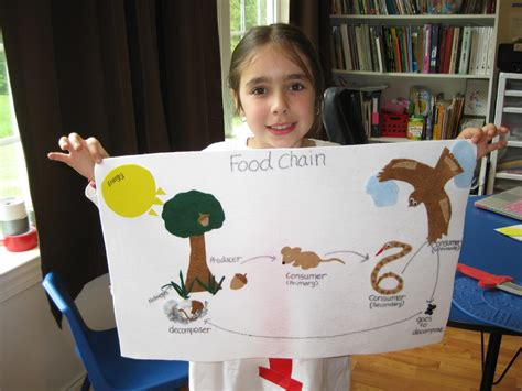 Food Chain Project For Kids