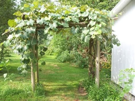 Free Grape Vine Trellis Plans