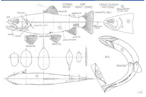 Free Printable Fish Carving Patterns