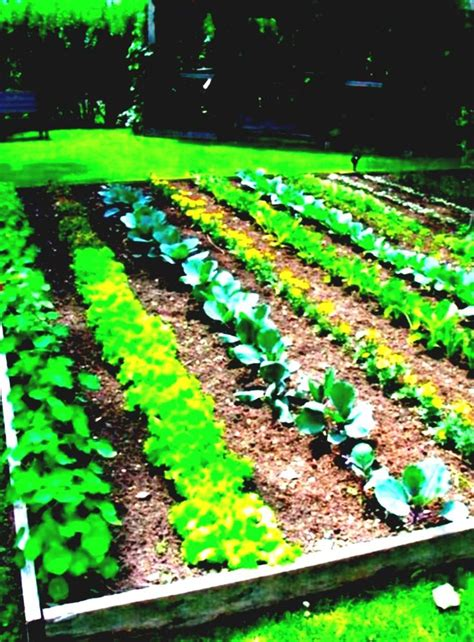 Free Vegetable Garden Design Software Mac