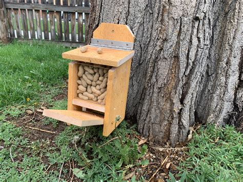 Free-Squirrel-House-Plans