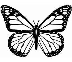 Best Free line drawings butterflies