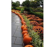 Best Garden ideas for fall