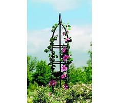 Best Garden obelisks and plant climbers