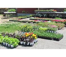Best Garden plants sale near me