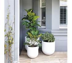 Best Garden pots and planters sydney