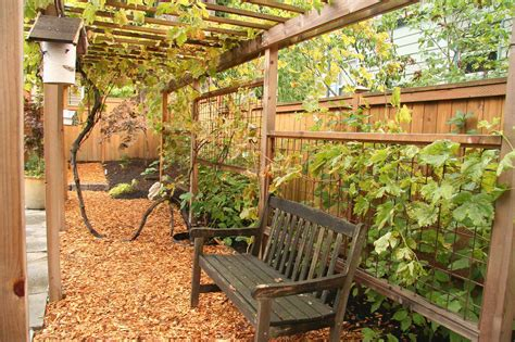 Grape Arbor Plans Trellis