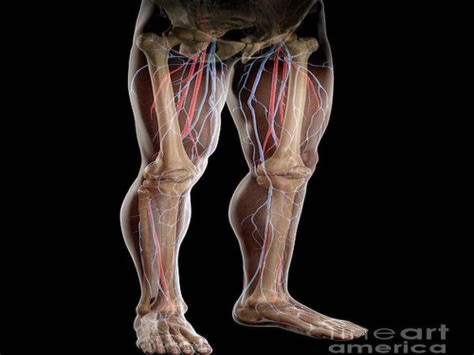 Greater-Saphenous-Originals-Woodwork