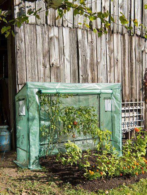 Greenhouse Diy Nj Tomatoes