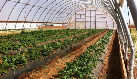 Greenhouse Vegetable Production Business Plan In India