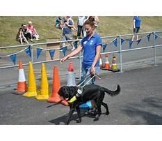 Best Guide dog training athens ga.aspx