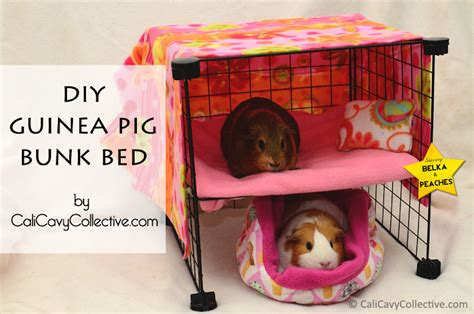 Guinea Pig Bunk Bed Diy Rustic