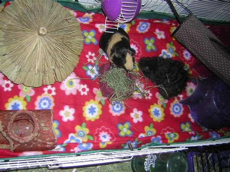 Guinea Pig Fleece Bedding For Oxbow Cage
