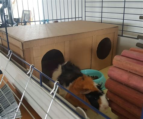 Guinea Pig Wood Houses Diy Projects