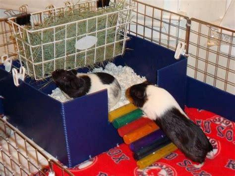 Guinea-Pig-Litter-Box-Diy-Little-Adventures