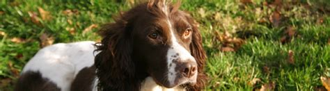 Gun dog training perthshire.aspx Image