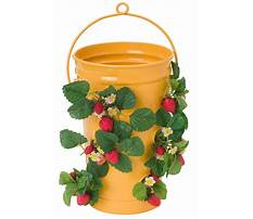 Best Hanging strawberry planters