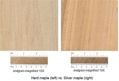 Hard-Vs-Soft-Maple-Woodworking