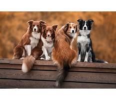 Best Hardest dog breed to potty train.aspx
