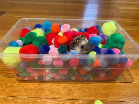 Hedgehog-Dig-Box-Diy
