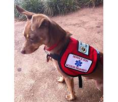 Best Help train therapy dogs.aspx
