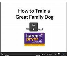 Best Hidden fence dog training.aspx