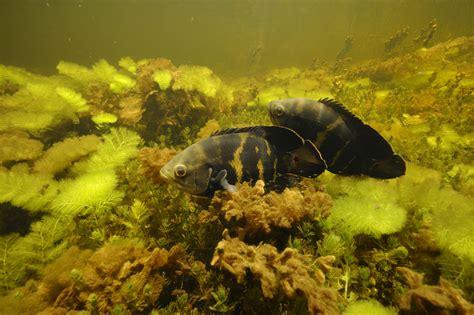 Hiroshi-Yamaguchi-Woodwork