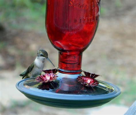 Homemade-Bird-Feeder-Nectar