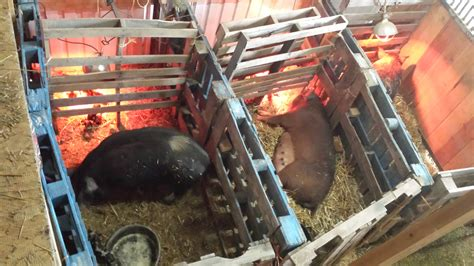 Homemade-Farrowing-Crate-Plans