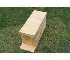 Best Honey bee nuc plans