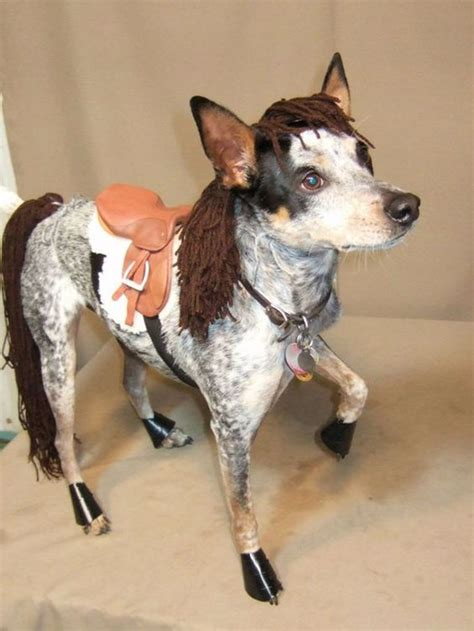 Horse Costume For Dogs Diy Projects