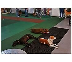 Best Houston dog training club.aspx