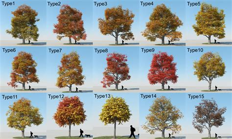 How Many Species Of Maple Trees Are There