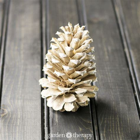 How To Bleach Pine Cones Southern Living