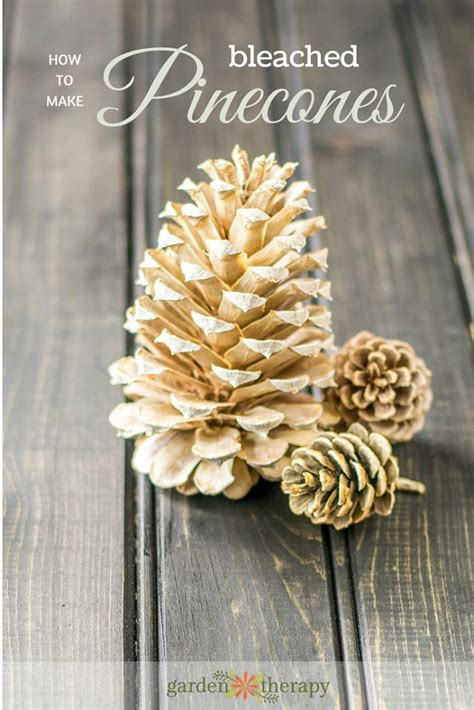 How To Bleach Pinecones For Crafts