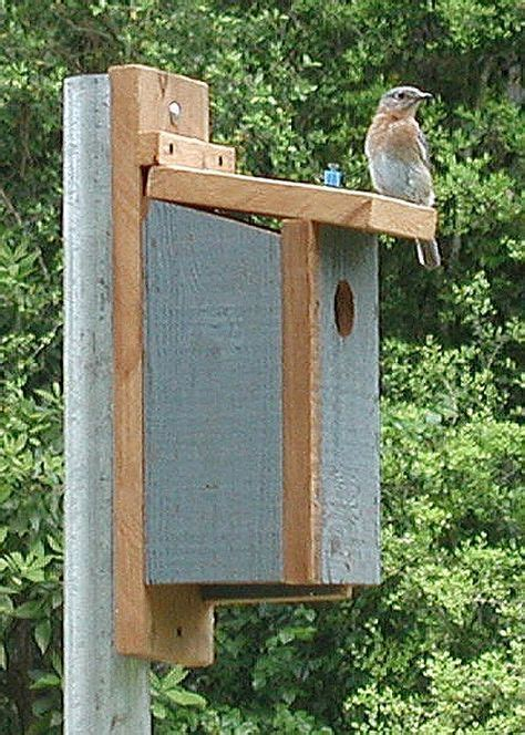 How To Build A Birdhouse For A Eastern Bluebird