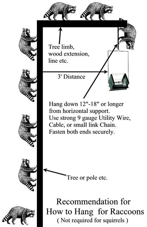 How To Build A Bluebird House How To Build Raccoon Proof