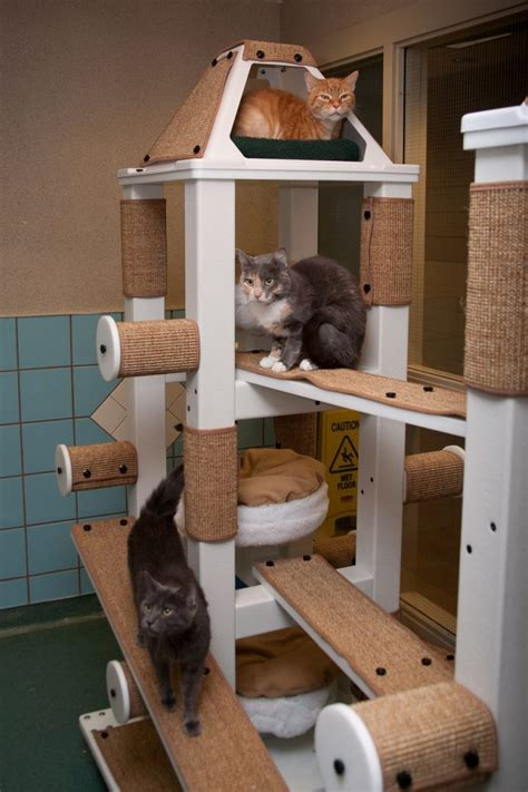 How To Build A Cat Tree For Cats To Climb