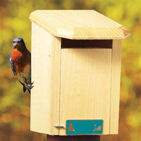 How To Build A Sparrow Proof Bluebird House