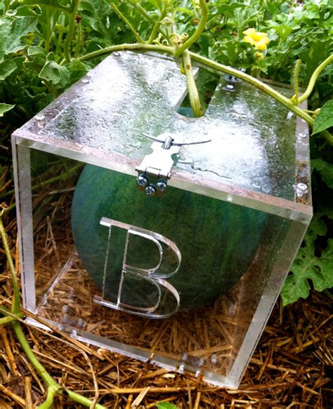 How To Build A Square Watermelon Box
