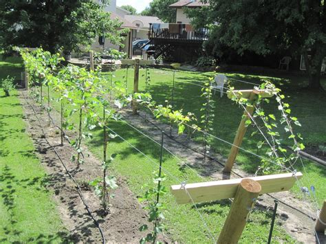 How To Build An Arbor For Grape Vines