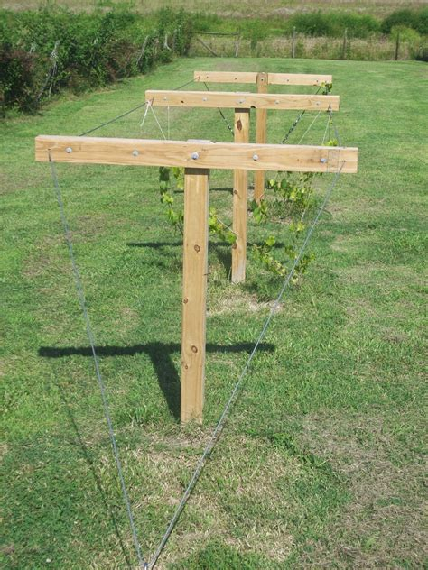 How To Build An Arbor For Muscadines