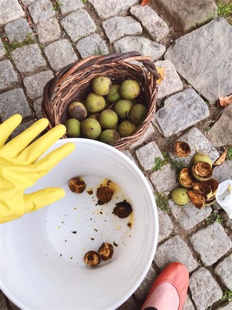 How To Clean Black Walnuts From Yard