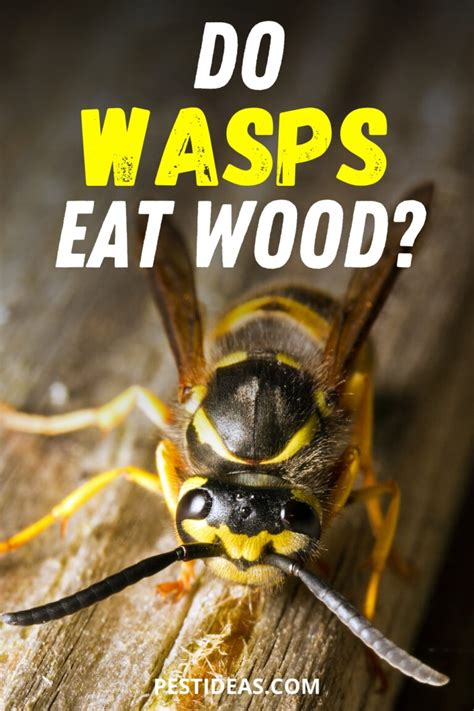 How To Diy Wood Eating Wasps