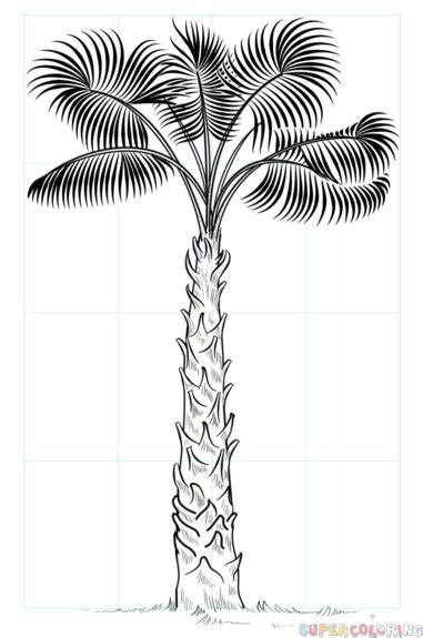 How To Draw A Sabal Palm