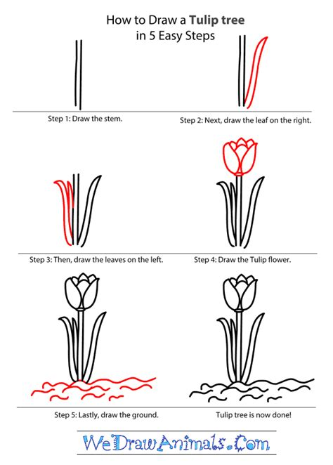 How To Draw A Tulip Tree