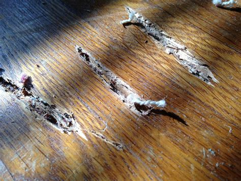 How To Fix Gouges In Wooden Floors