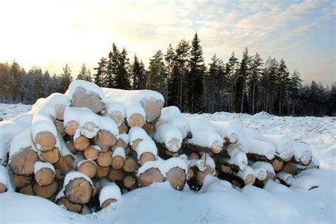 How To Keep Firewood Dry In Winter