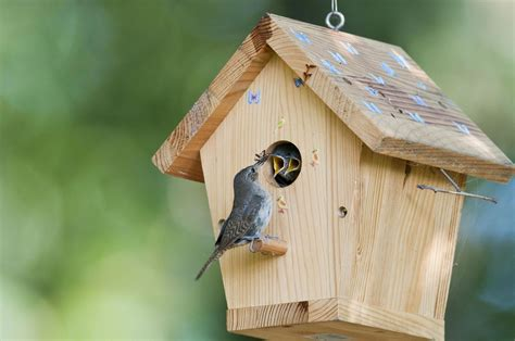 How To Make A Bird Shelter For Doves