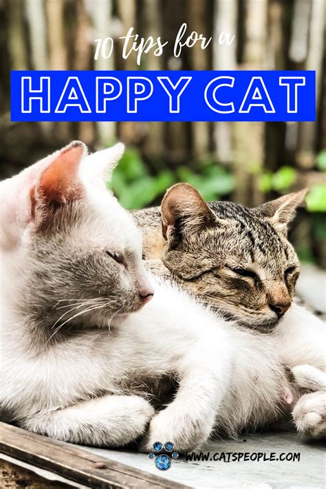 How To Make A Cranky Cat Happy